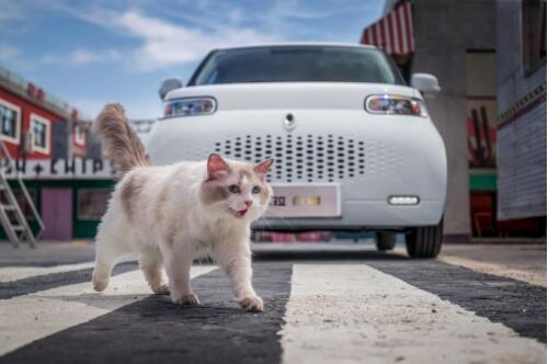 微型车新标杆,对标零跑T03,欧拉白猫怎么做到全面胜出?
